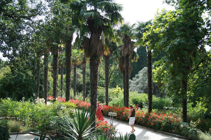 Приморский парк. Пальмовая аллея