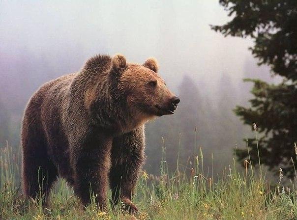 Медведь как оберег семейного очага на Руси