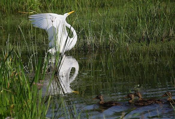 река Волга флора и фауна