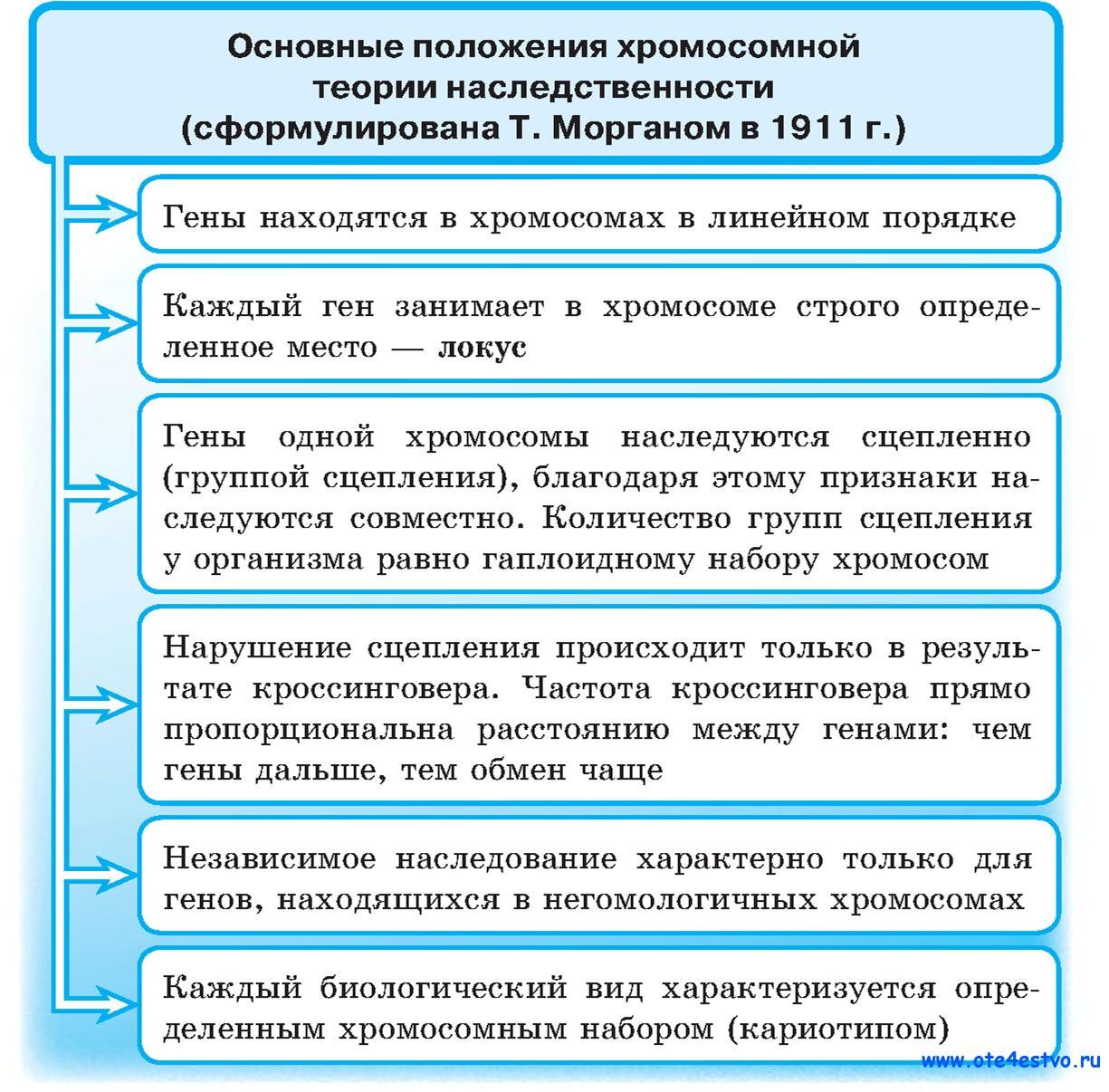 Закон моргана схема скрещивания